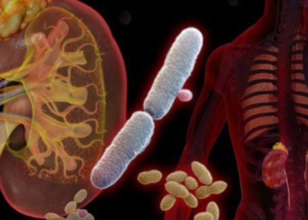 Nhiễm khuẩn tiết niệu là một bệnh phổ biến trong cộng đồng dân cư
