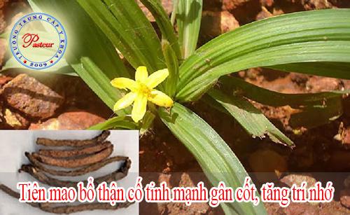 tien-mao-tang-cuong-tri-nho